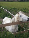 Walking London - Horses Farm