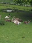 Walking London - Bambi!