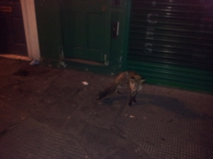 High-Flyng Views of London - a fox in the street!