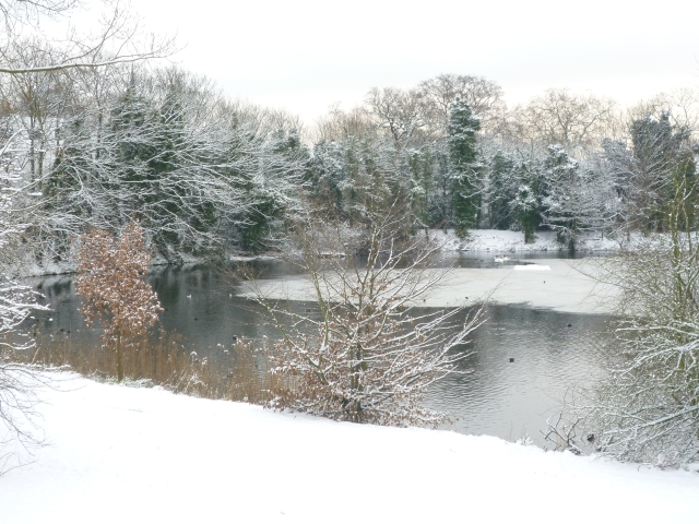 Snowy London - Hampstead Heath5