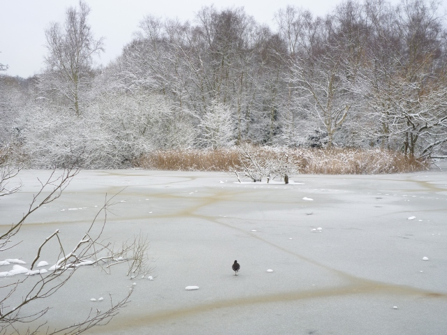 Snowy London - Hampstead Heath6