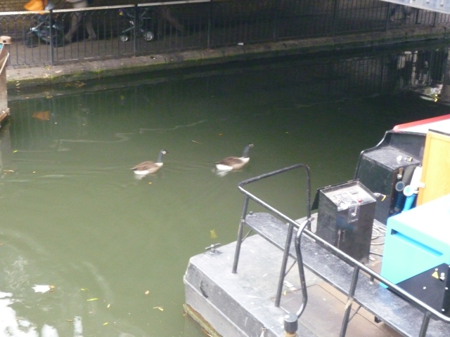 Inside the Camden Lock Canal - Ducks!