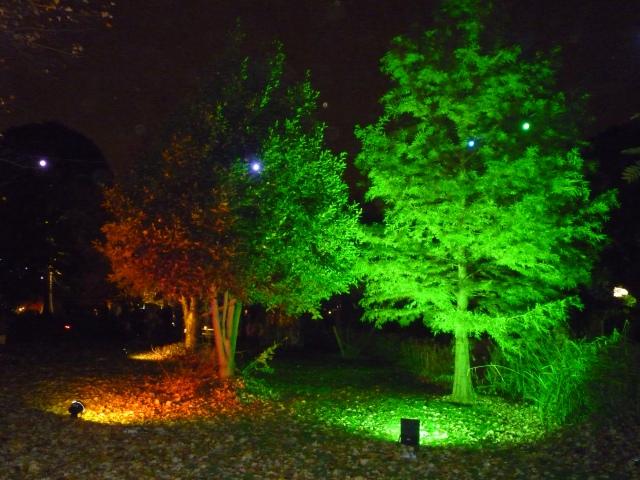 A Walk through an Enchanted Woodland - beautiful use of light