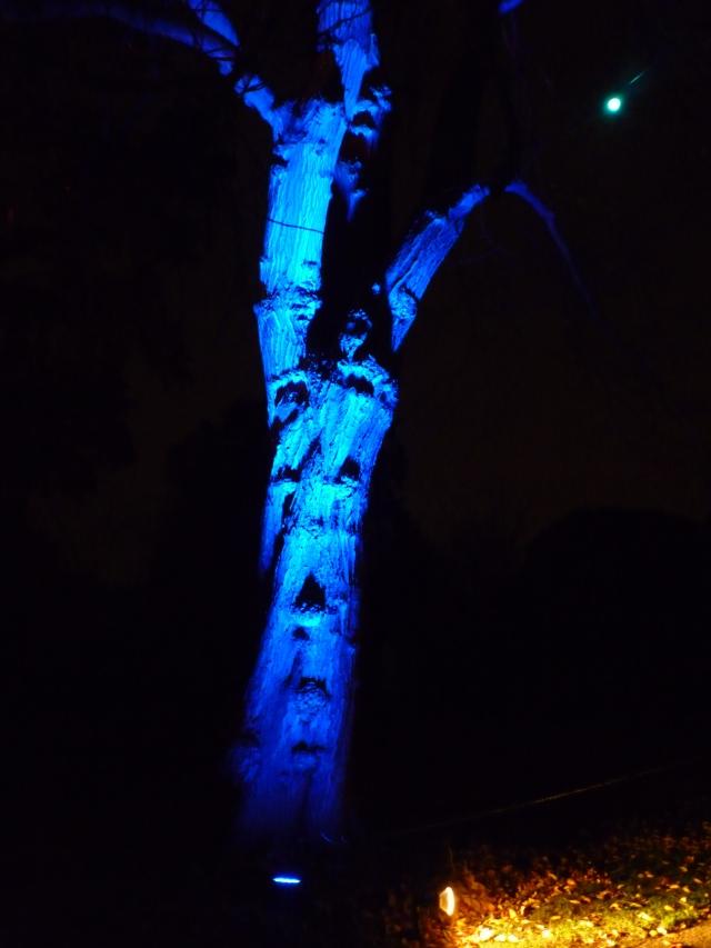 A Walk through an Enchanted Woodland - a scary tree