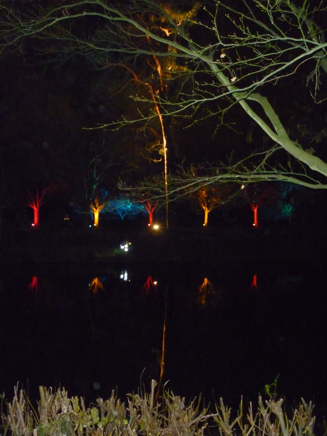 A Walk through an Enchanted Woodland - trees reflected on water