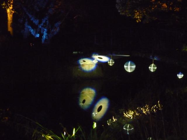 A Walk through an Enchanted Woodland - Nessy's cousins