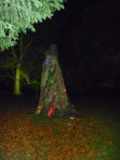 A Walk through an Enchanted Woodland - just a tree trunk?