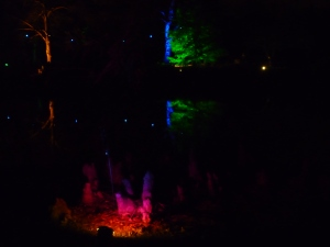 A Walk through an Enchanted Woodland - fire! 3