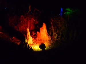 A Walk through an Enchanted Woodland - fire! 4