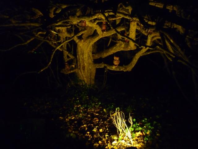 A Walk through an Enchanted Woodland - meet the owls