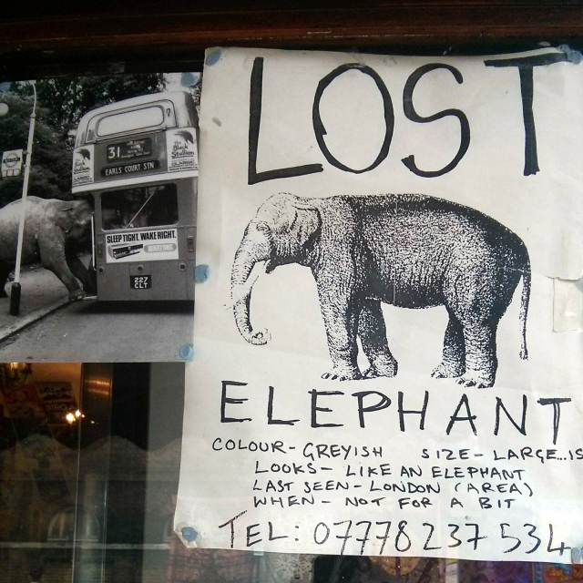 Picture Wednesday - The Elephant Conundrum