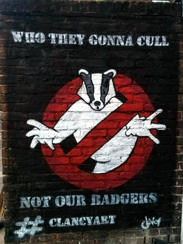 Picture Wednesday - Badger Culling